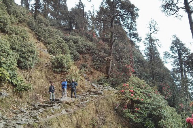 Nature Trekking Near Dharamshala With Lunch