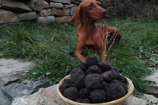 Truffle Hunting & Tasting in Transylvania