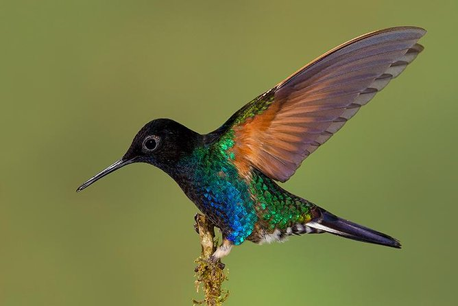 Hummingbird Expedition - PRIVATE PHOTO TOUR, all included