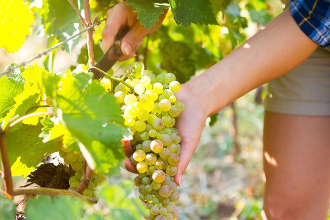 An opportunity to learn about wines