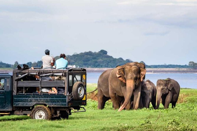 Jeep Safari To One Of a National Park Where You see Lot Of Animals On that day