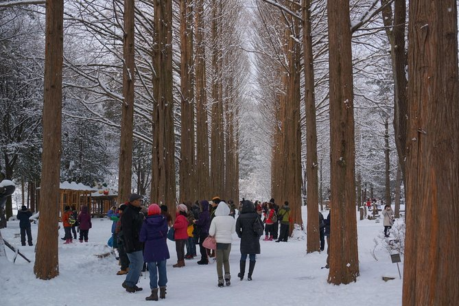 Premium Private Tour Nami Island & Petite France or The Garden of Morning Calm