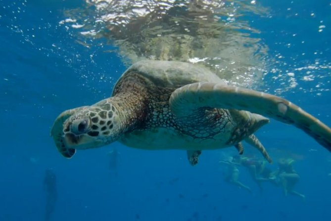 Turtle Snorkeling Adventure (Boat Tour)