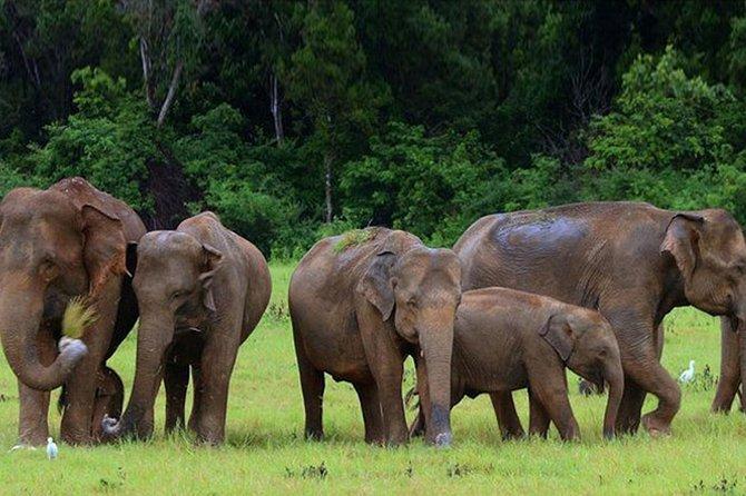Udawalawe National Park safari trip from Hikkaduwa