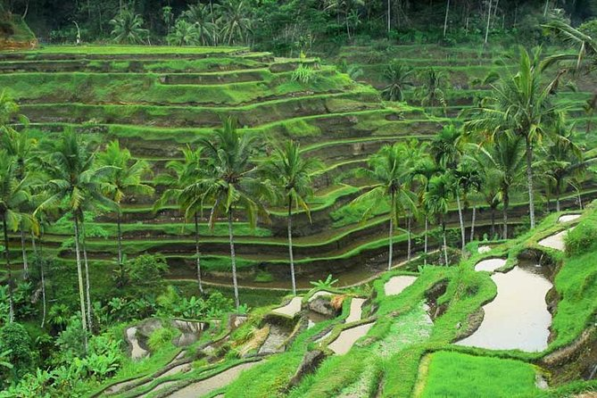 Ubud Private Car Tour explore Culture and Nature
