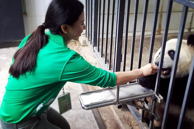 One day Panda Volunteering Experience accompanied by English speaking staff