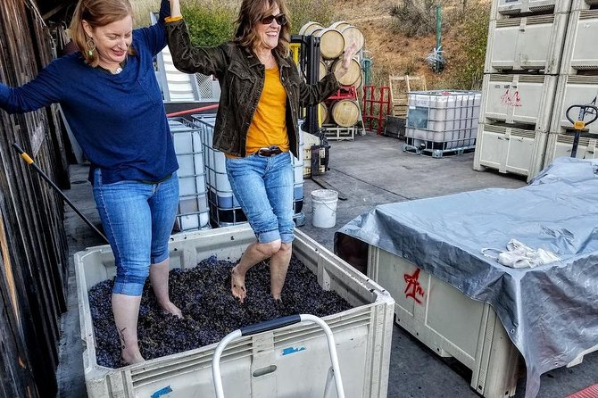 Aniche Cellars Harvest Stomp