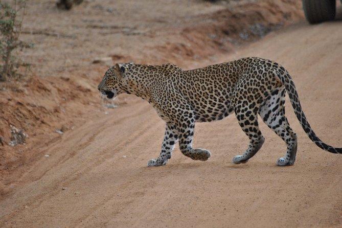 Yala Safari Day Tour from Bentota and Its' Surrounding Area