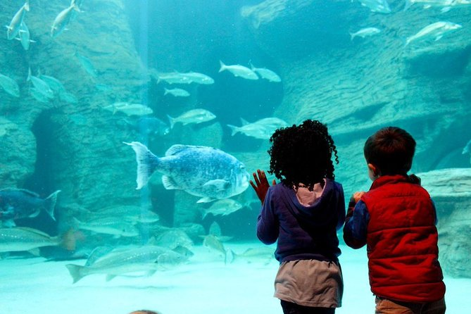 Cape Town Full Day Family Fun With Kids Private Tour