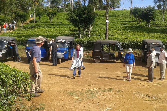 Tuk Tuk safari and Picnic in The Tea Plantation from Ella,Haputale & Bandarawela