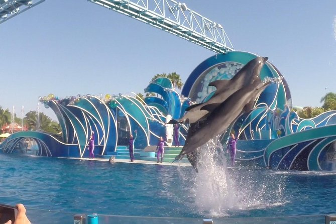 Dolphin Show Tour from Pattaya