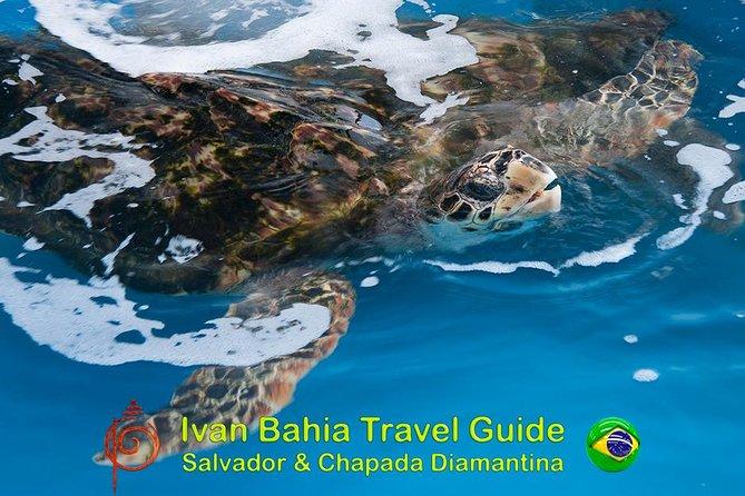 Private Beach Tour, Swim with Turtles Imbassai, Visit Projeto Tamar Praia Forte