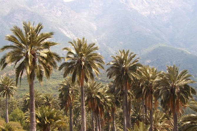 Biggest Chilean Palm Tree Forest Hike