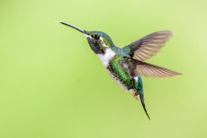 Hummingbirds of the Andes day tour.