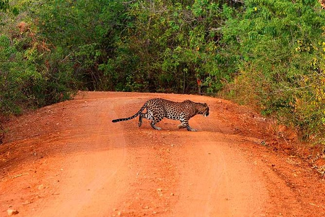 Yala Safari Day Trip from Bentota & Surroundings - All Inclusive