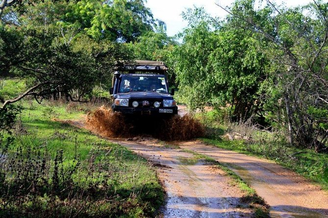 Private Tour : Udawalawe National Park Safari