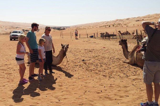 Camels farm