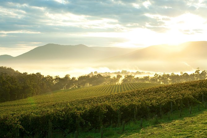 Yarra Valley Private Tour including Healesville Sanctuary and Wineries