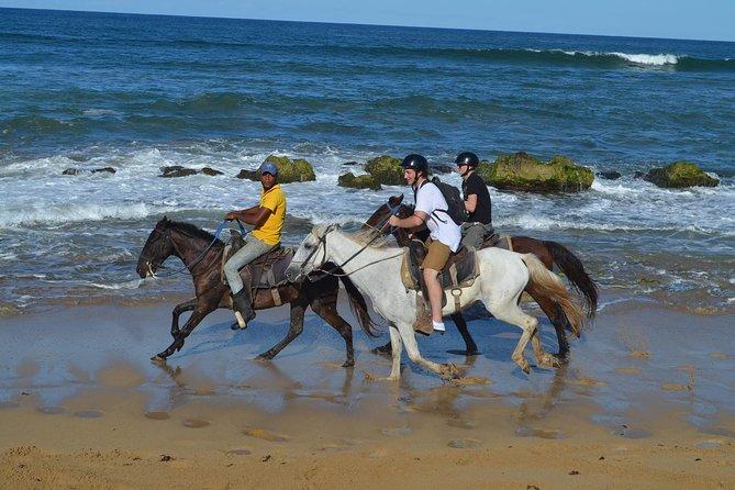 Captivating Punta Cana Horseback Riding
