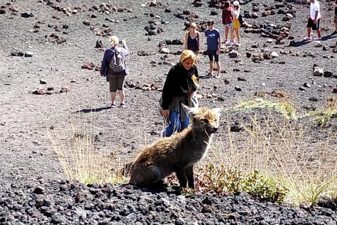 etna-excursion-matinale-en-jeep-avec-chauffeur-guide