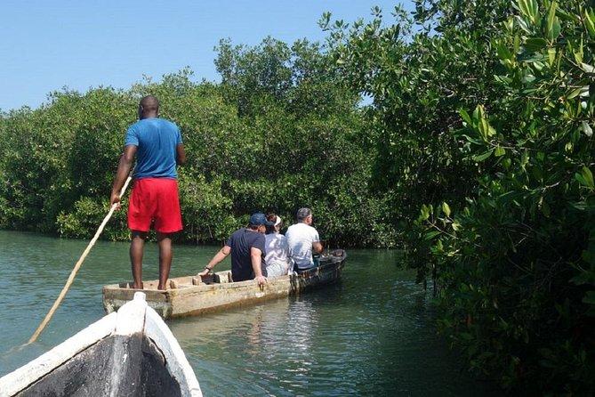 Cartagena canoe mangroves