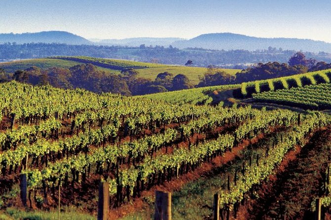 Private Day Trip to Hunter Valley from Sydney with Pickup