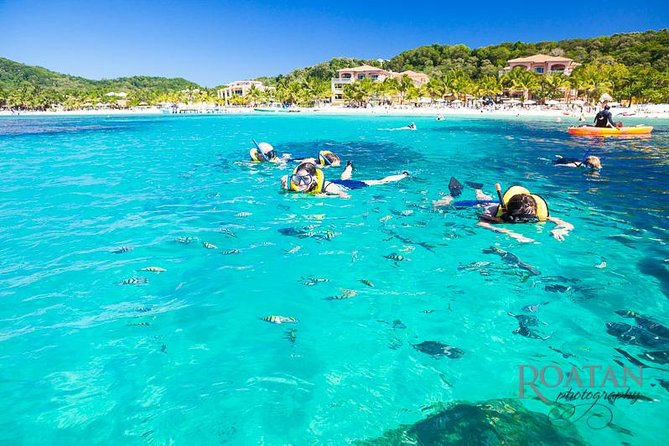 Excursion à Roatan: Beach Break / Plus Sloth Park et Snorkel Adventure
