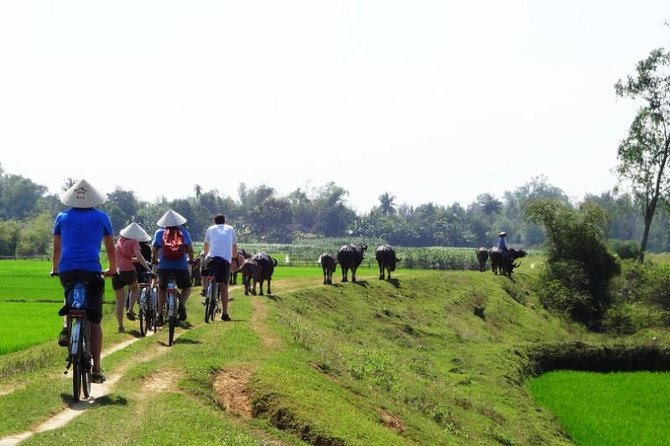 Village Cycling in Hoi An Prviate Tour