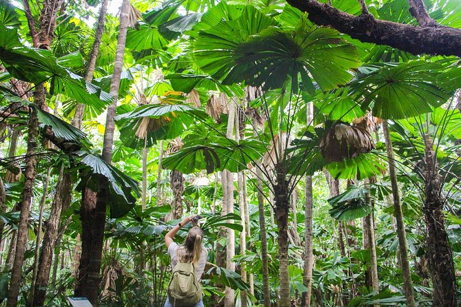 Cape Tribulation, Daintree Rainforest and Wildlife Tour