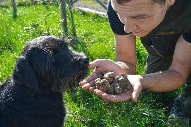 Slovenian Truffle Hunting Experience