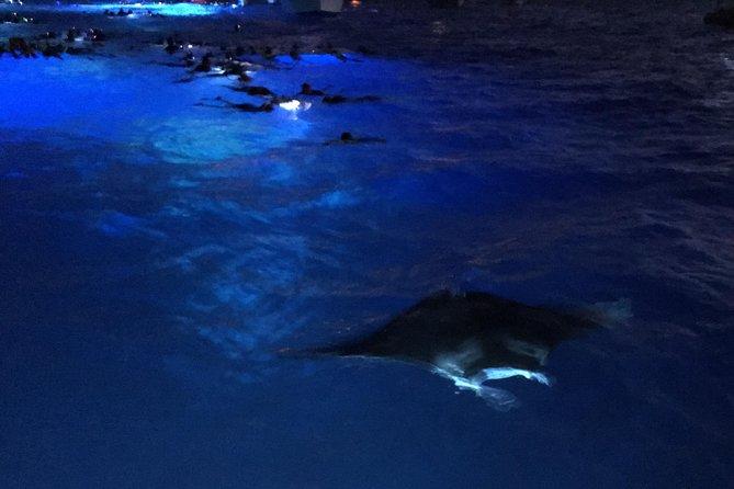 Guaranteed Manta Ray Night Snorkel