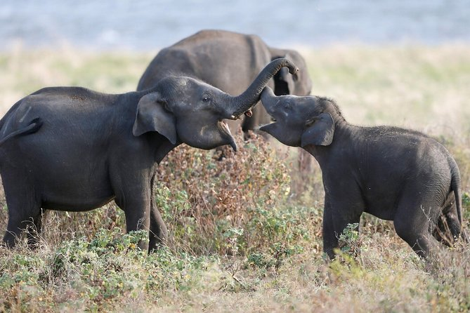 Kaudulla national park from Negombo inclusive of jeep safari