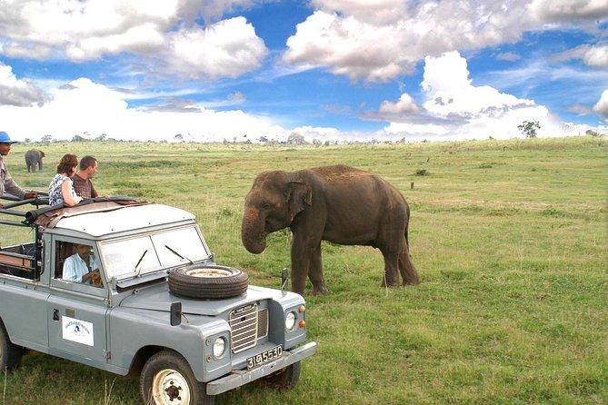 Udawalawe National Park Adventure