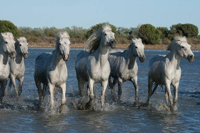 Arles and Camargue Small-Group Half-Day Tour from Avignon