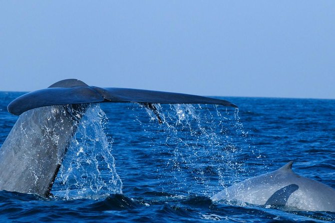 Mirissa Whale Watching ( Vehicle Only Private Day Trip From Colombo)