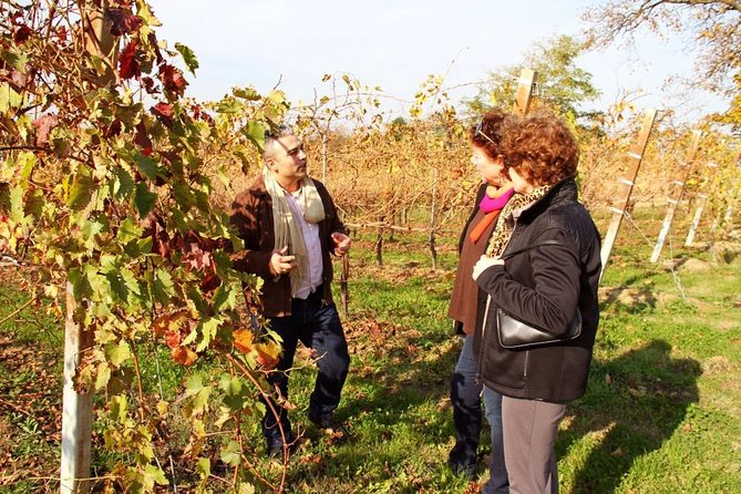 Organic Wine & Shopping tour from Bologna