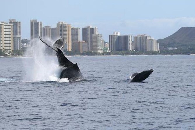 Whale Watch, Dolphins, Turtles and Sightseeing Cruise - 1pm