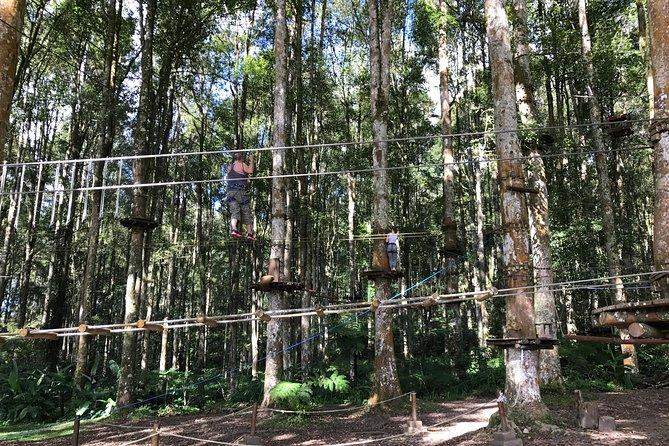 Full-Day Bali Treetop Adventure Park Visit with Jatiluwih Rice Terrace Tour