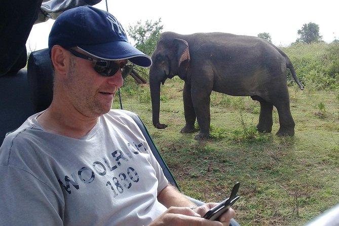 Full Day Safari Tour in Udawalawe National Park