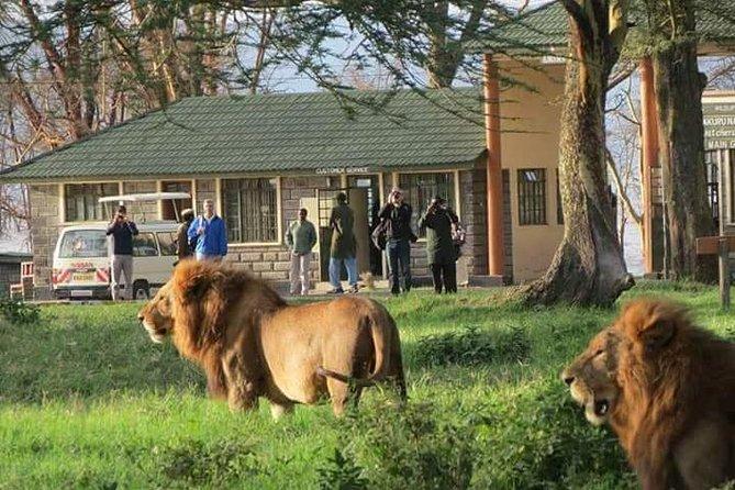 Lake Nakuru day tour