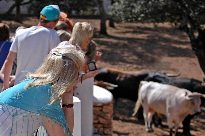Visit a Horse and Bull Farm including a tour to Ronda