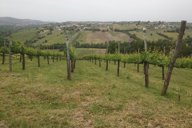 Full-Day Wine Tasting Tour in the Province of Avellino