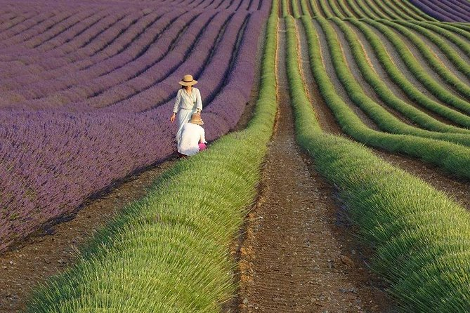 The Lavender country - Private tour with a local guide