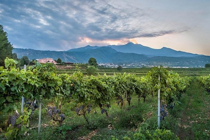 Wine Tasting tour from Catania