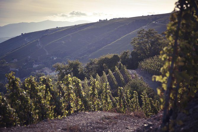Rhône Valley Wine Tasting Private Day Tour from Lyon
