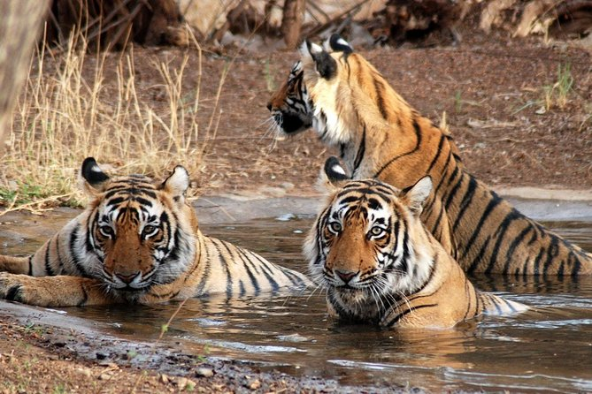 Half Day private Safari in Ranthambore Tiger Reserve