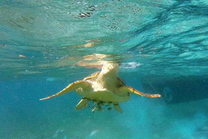Couples Private Day Tour: Silk Cayes and Turtle Alley Snorkeling Adventure photo 1