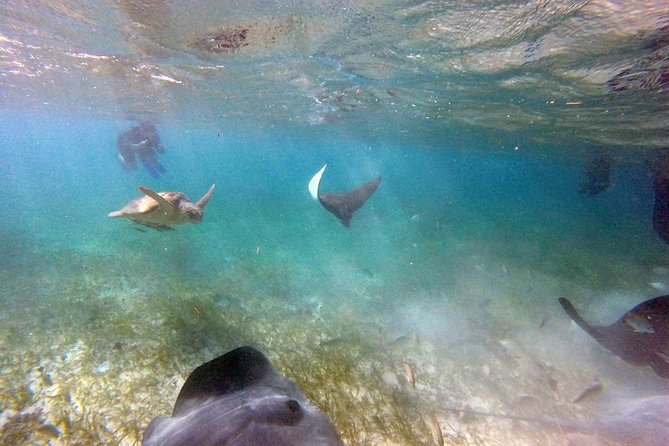 Couples Private Day Tour: Silk Cayes and Turtle Alley Snorkeling Adventure photo 3