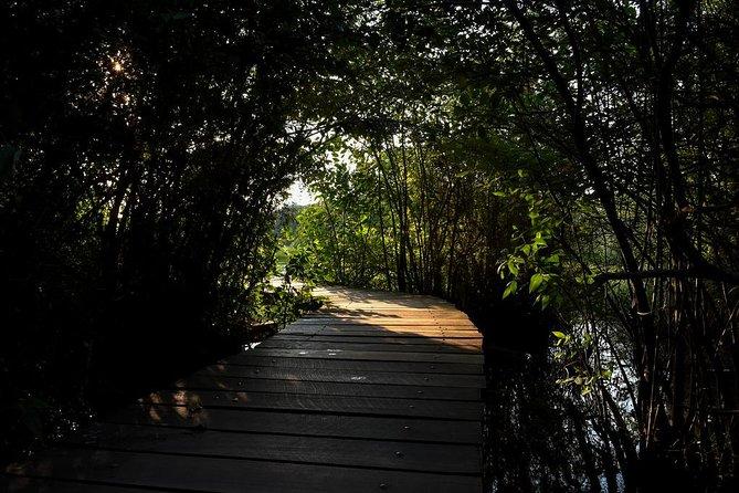 Shore Excursion to Panoramic Colombo & Boat safari at Colombo Wetland