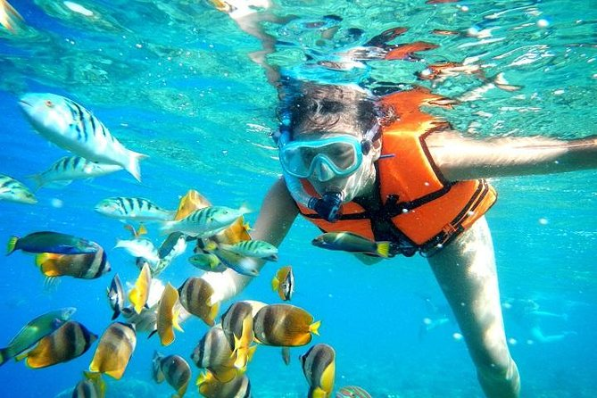 Coral Reef Snorkeling with Lunch and Roundtrip Transportation in Puerto Morelos